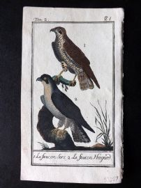 Buffon 1785 Antque Hand Colored Bird Print. Haggard Falcon, Hawk 2-1